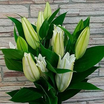 Лилия - Склад-Цветы.рф