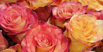 ЯЗЫК ЦВЕТОВ или Как подарить цветы, чтобы рассказать о своих чувствах?