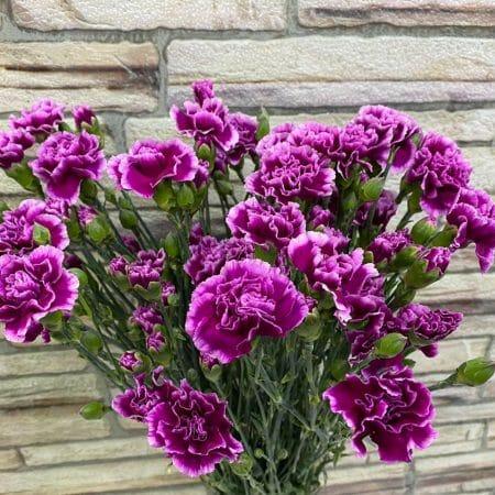 Гвоздика - Склад-Цветы.рф