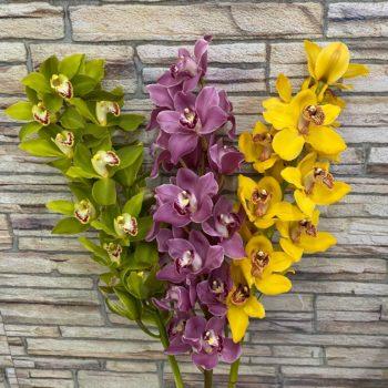 Орхидея - Склад-Цветы.рф