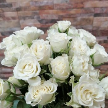 Роза в магазине Склад-Цветы.рф