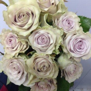 Роза одноголовая Склад-Цветы.рф