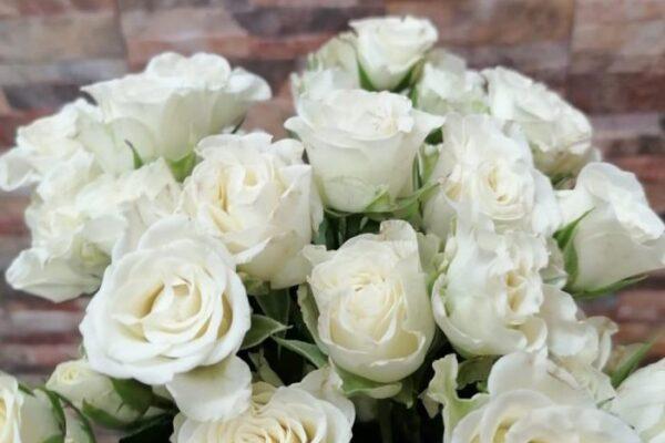 Роза Склад-Цветы.рф