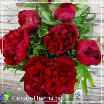 Пион Склад-Цветы.рф