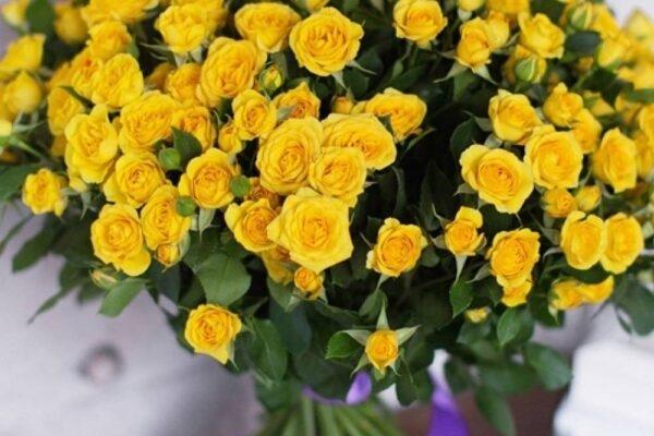 Роза кустовая Склад-Цветы.рф